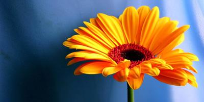 Welche Frühlingsblume bist du?