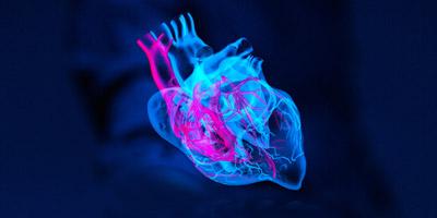 Das Herz welches Tieres schlägt in dir?