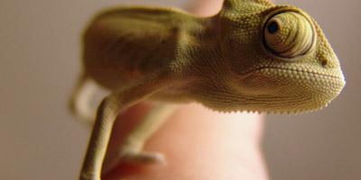Kennst du diese 18 exotischen Tiere?