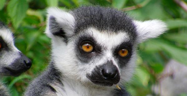Wie heißt das kleine Kerlchen mit den großen Augen?