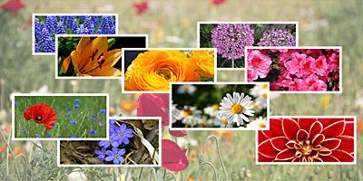 Kannst du diese 20 Blumen benennen?