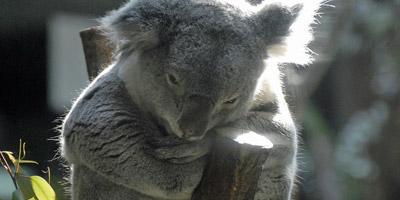 Welchem Tier ähnelst du, wenn du urlaubsreif bist?