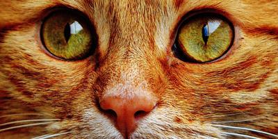 Was stellt deine Katze an, wenn sie sturmfrei hat?