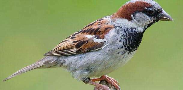 Beginnen wir ganz einfach: Was ist das für ein Vogel?
