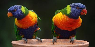 Erkennst du diese 20 Vogelarten?