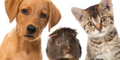Was denkt dein Haustier wirklich über dich?