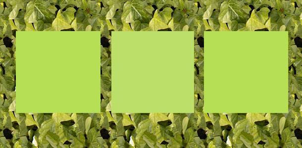 Welches Viereck ist andersfarbig?
