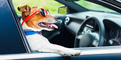 Welches Talent schlummert in deinem Hund?