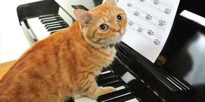 Welches Talent schlummert in deiner Katze?