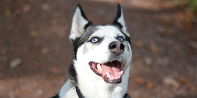 Welche Hunderasse passt am besten zu dir?