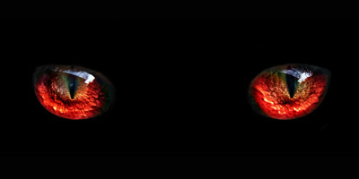 Wieviel böses Blut fließt durch deine Adern?