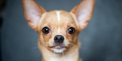 Welcher Hunderasse ähnelst du, wenn du wütend bist?