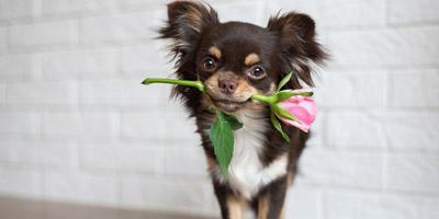 Welchem Tier ähnelst du beim Flirten?