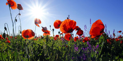 Welche Sommerblume wärest du?