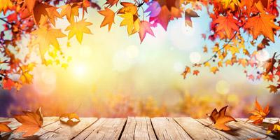 Welche Herbstfarbe spiegelt deine Gefühlswelt wider?