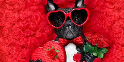 Was solltest du deinem Schatz zum Valentinstag schenken?