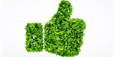 Das Pflanzenquiz - Hast du einen grünen Daumen?