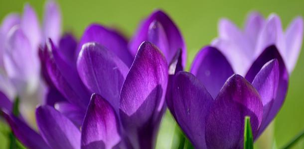 Es geht einfach los: Wie heißen diese Blumen?