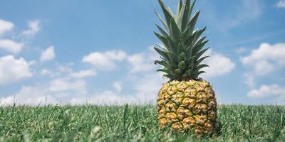 Welche Frucht symbolisiert deine Persönlichkeit?
