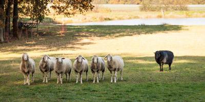 Schwarzes Schaf oder Everybody's Darling: Welche Rolle nimmst du in deiner Familie ein?