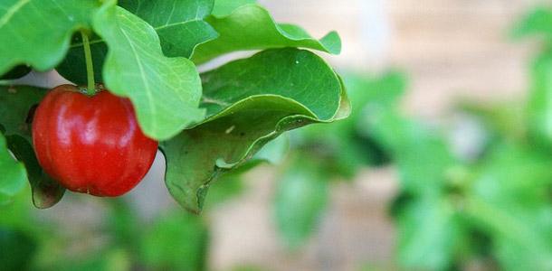 Acerola - Obst oder Gemüse?