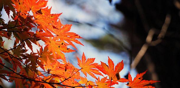 Zu welchem Baum gehören diese Blätter?