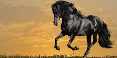 Erkennst du diese 10 berühmten Pferde?