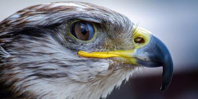Welcher Vogel spiegelt deine Persönlichkeit wider?