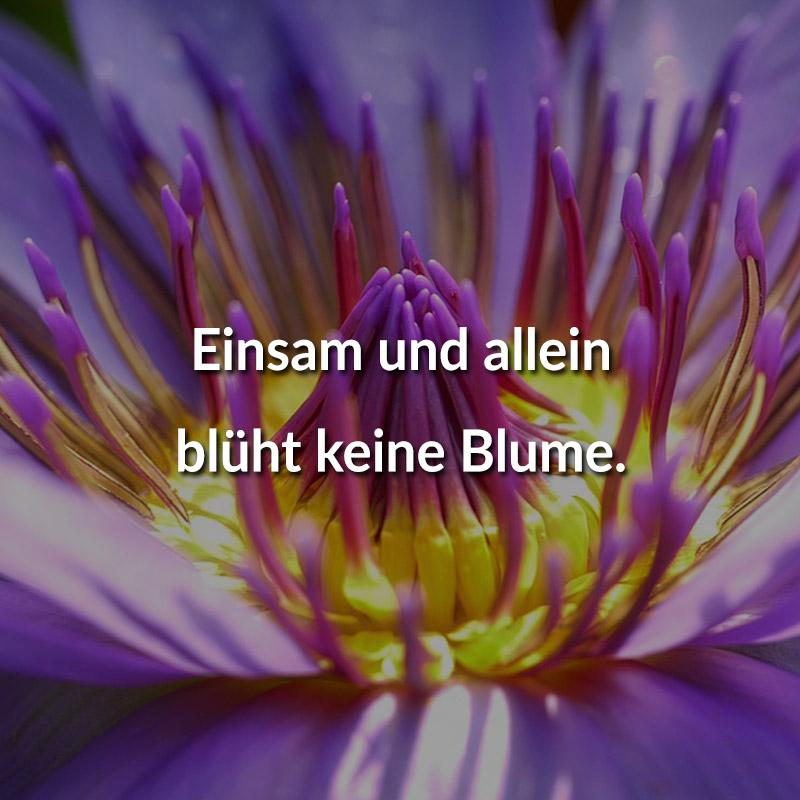 Einsam und allein blüht keine Blume.
