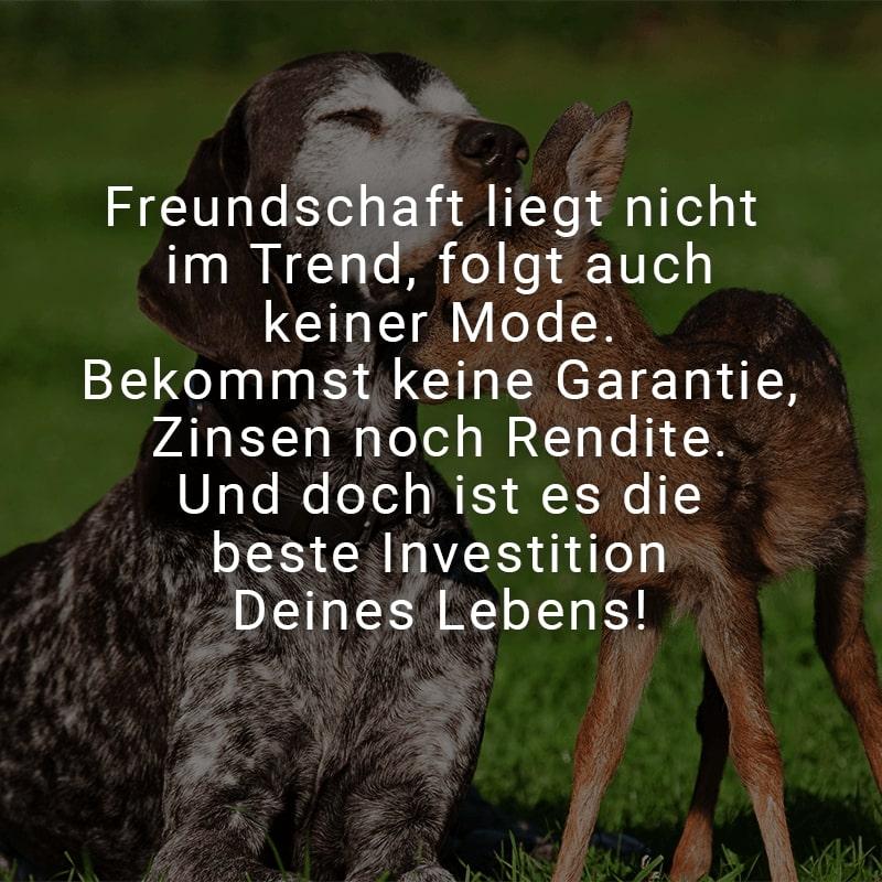 Freundschaft liegt nicht im Trend, folgt auch keiner Mode. Bekommst keine Garantie, Zinsen noch Rendite. Und doch ist es die beste Investition Deines Lebens!