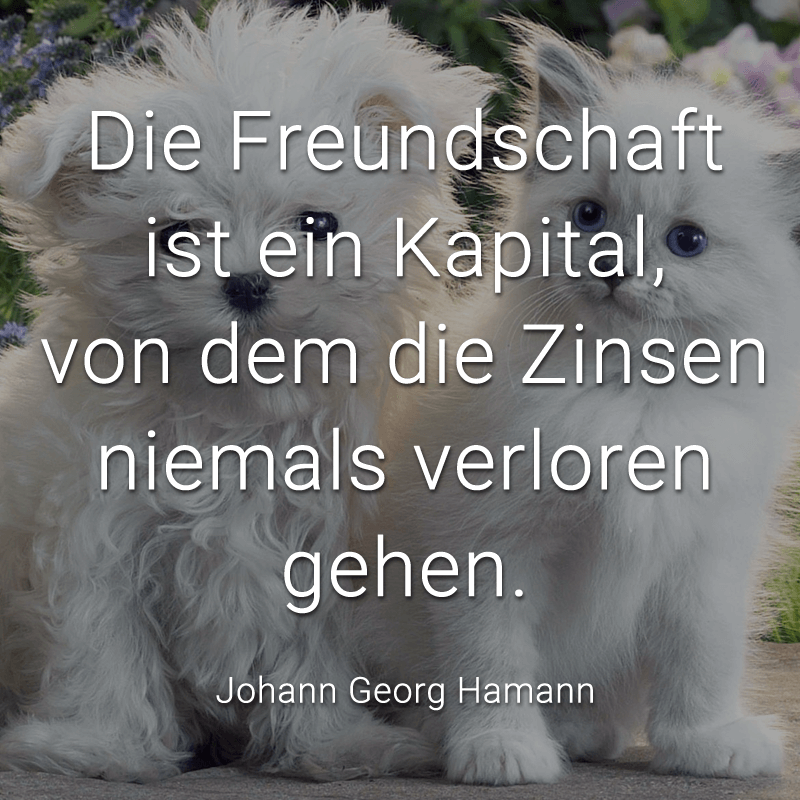 Die Freundschaft ist ein Kapital, von dem die Zinsen niemals verloren gehen. (Johann Georg Hamann)