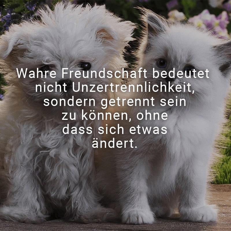 Wahre Freundschaft bedeutet nicht Unzertrennlichkeit, sondern getrennt sein zu können, ohne dass sich etwas ändert.