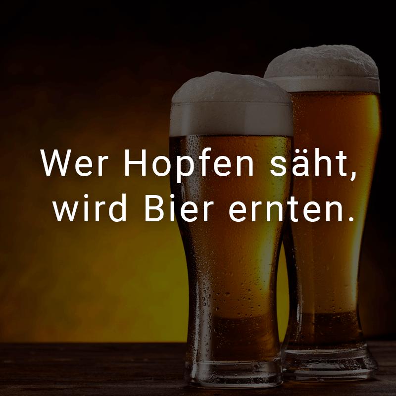 Wer Hopfen säht, wird Bier ernten.
