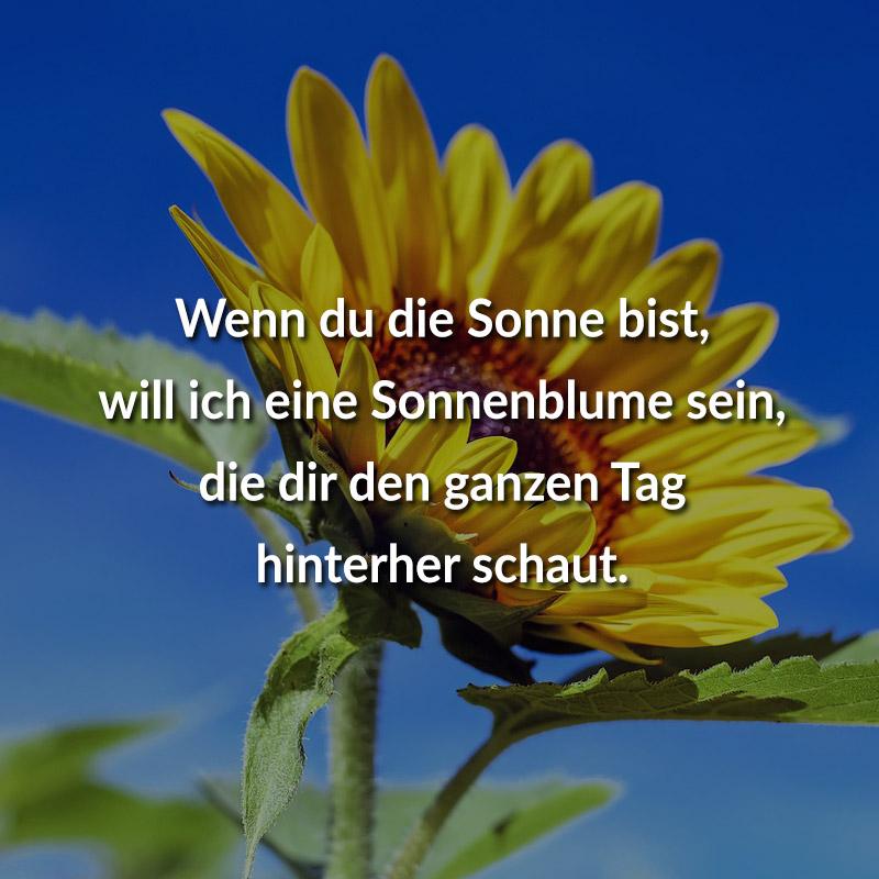 Wenn du die Sonne bist, will ich eine Sonnenblume sein, die dir den ganzen Tag hinterher schaut.
