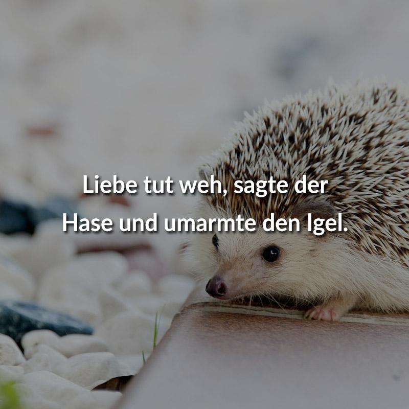 Liebe tut weh, sagte der Hase und umarmte den Igel.