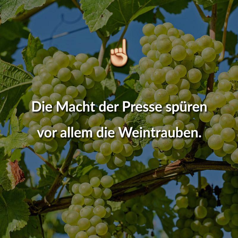 Die Macht der Presse spüren vor allem die Weintrauben.