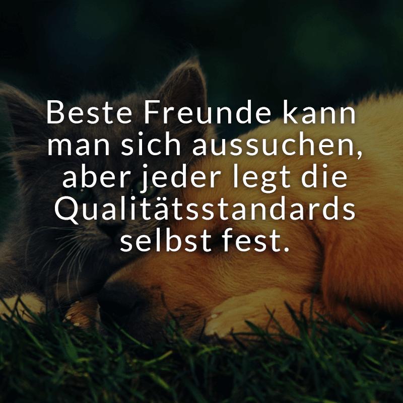 Beste Freunde kann man sich aussuchen, aber jeder legt die Qualitätsstandards selbst fest.