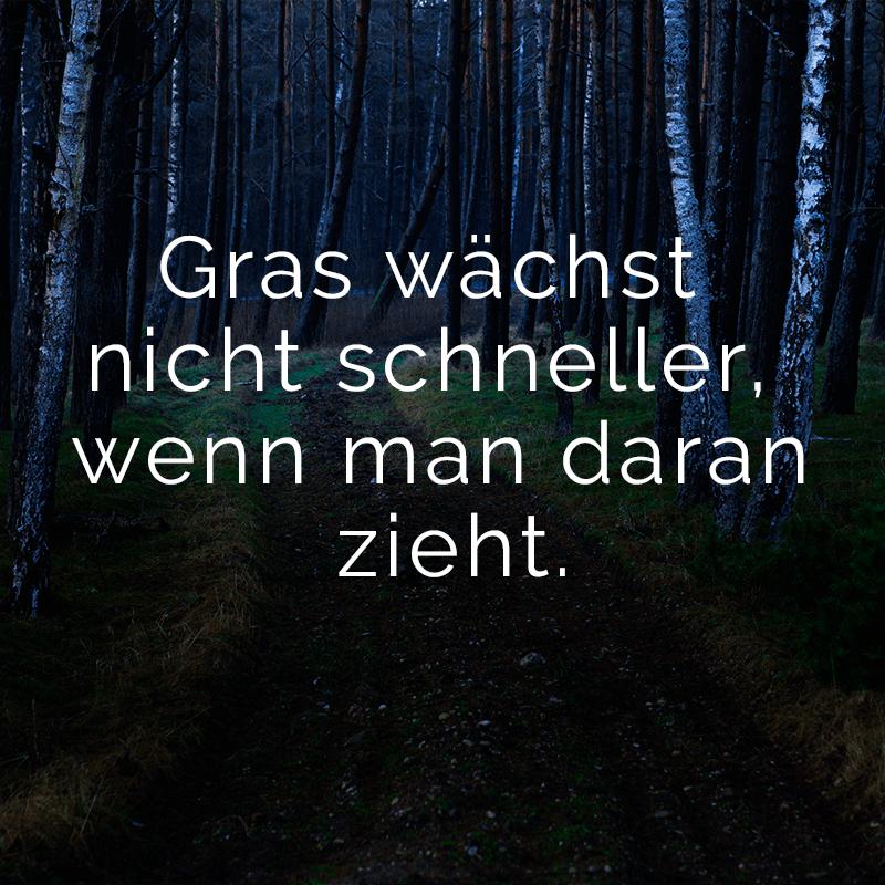 Gras wächst nicht schneller, wenn man daran zieht.