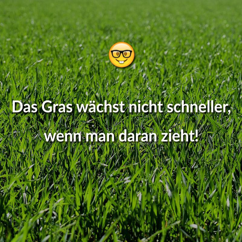 Das Gras wächst nicht schneller, wenn man daran zieht!