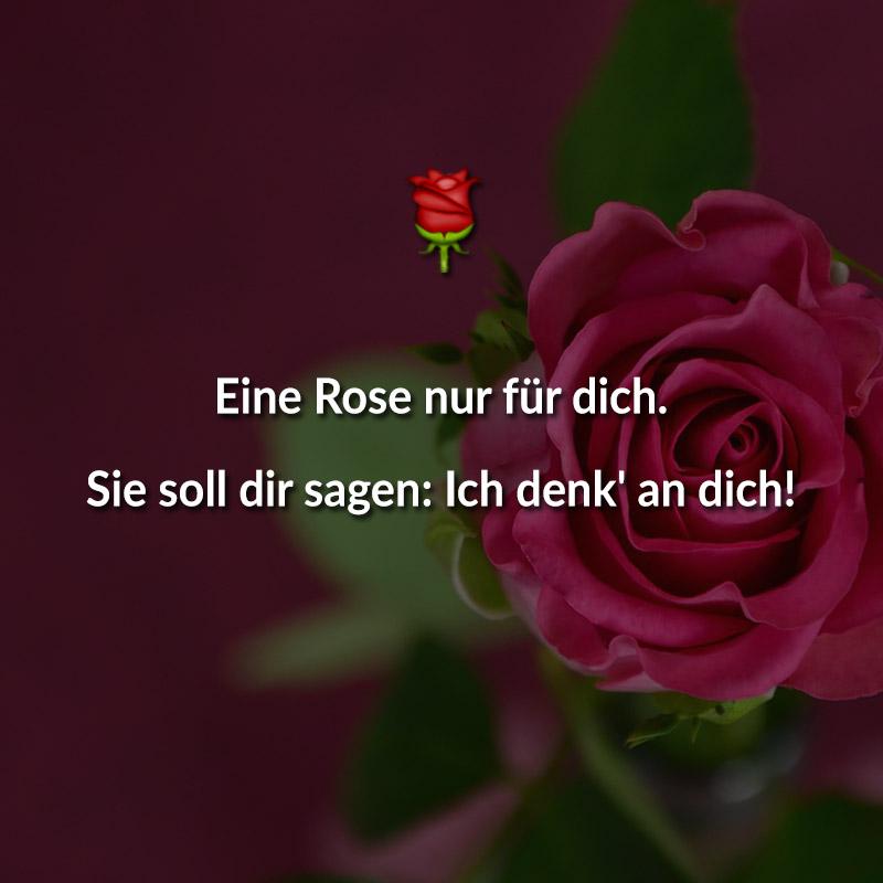 Eine Rose nur für dich. Sie soll dir sagen: Ich denk' an dich!