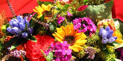 Welche Blume passt zu dir?