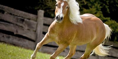 Kannst du diese 15 Pferderassen benennen?