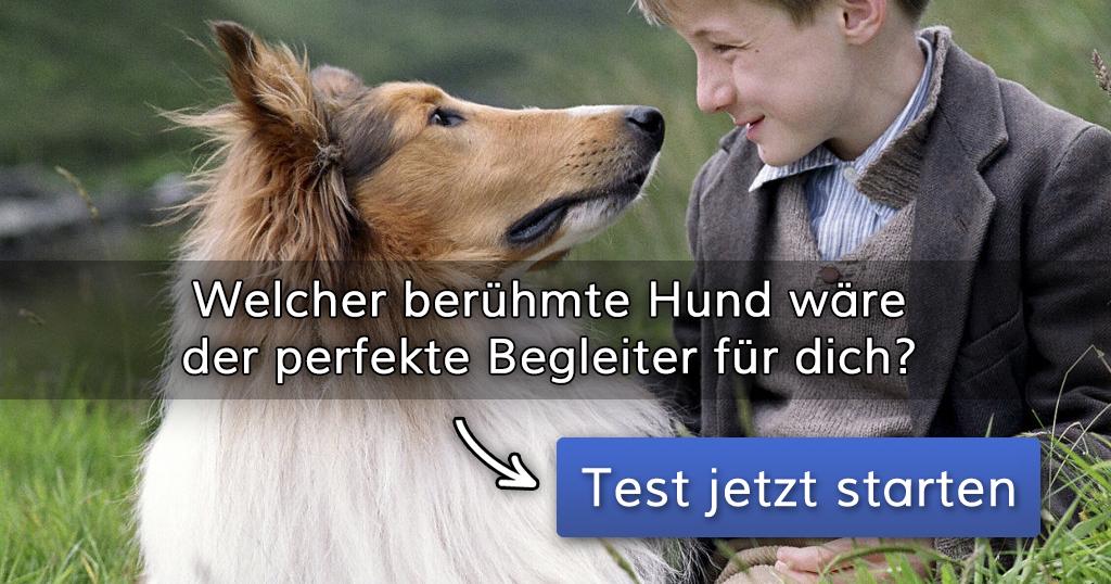 ᐅ Welcher berühmte Hund wäre der perfekte Begleiter für dich?