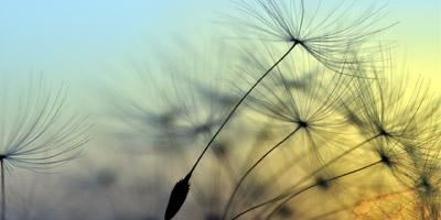 An welchem Tag wird sich für dich ein großer Traum erfüllen?
