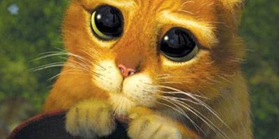 Erkennst du diese berühmten Katzen aus TV und Internet?
