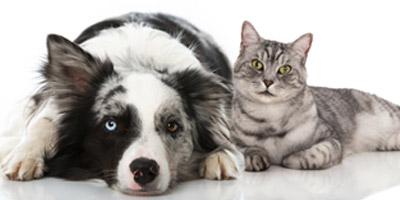 Bist du eher wie eine Katze oder wie ein Hund?