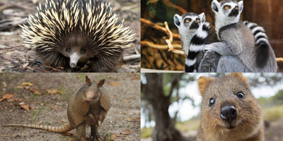Kennst du die Namen dieser 15 Tiere?