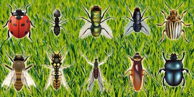 Das große Krabbeln - Benenne diese 10 Insekten!