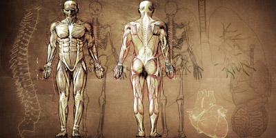 Wie gut kennst du den menschlichen Körper?