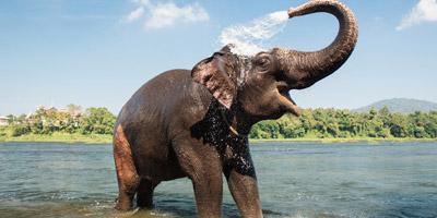 Nur echte Tierpfleger bestehen dieses Elefanten-Quiz!